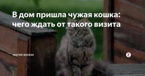 К чему по приметам кошка приходит в дом, что означает, если прибился котенок