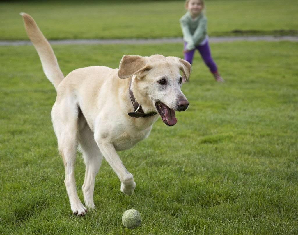 Почему собака грызет свои лапы