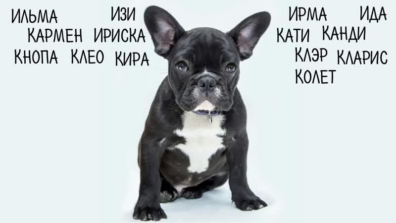 Красивые клички для собак девочек, легкие и мелодичные имена.