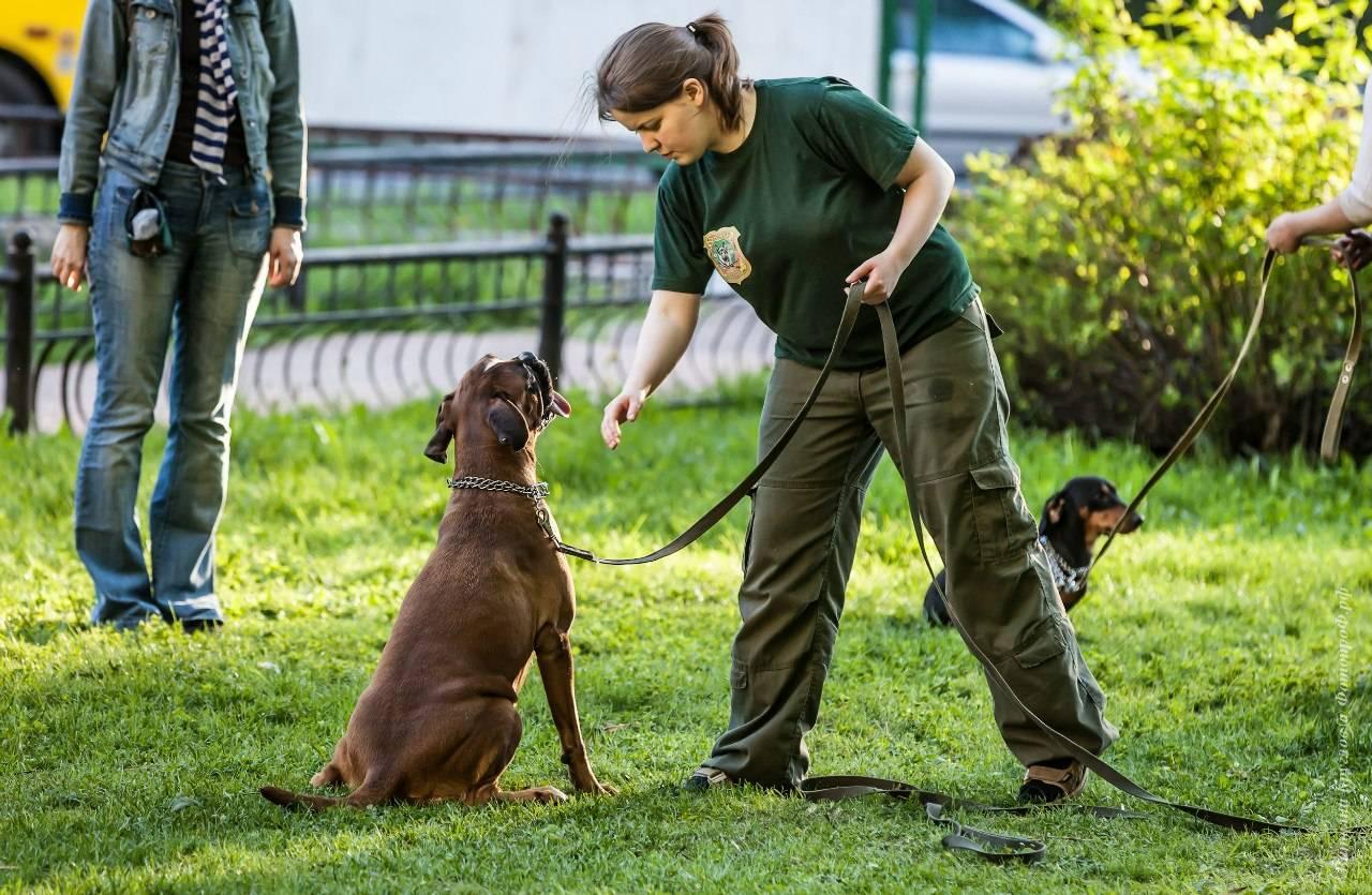Как показать собаке, что ты вожак: 5 типов поведения настоящего хозяина