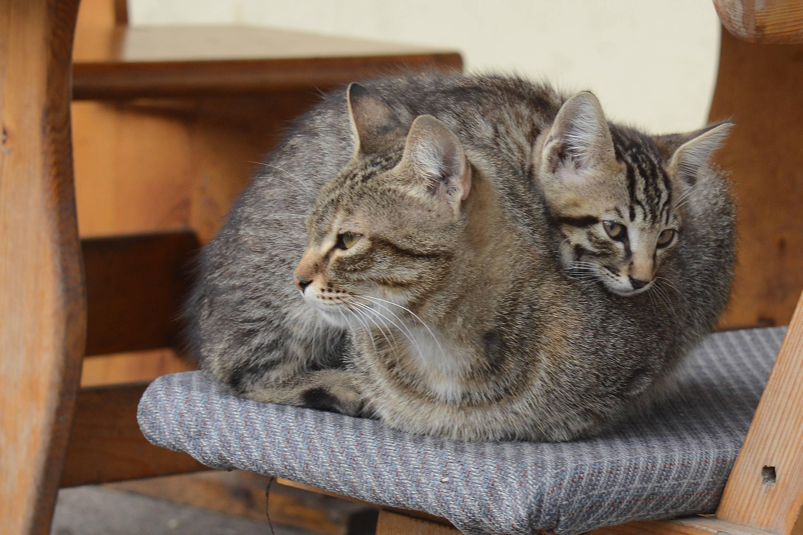 Почему котики – лучшие домашние животные