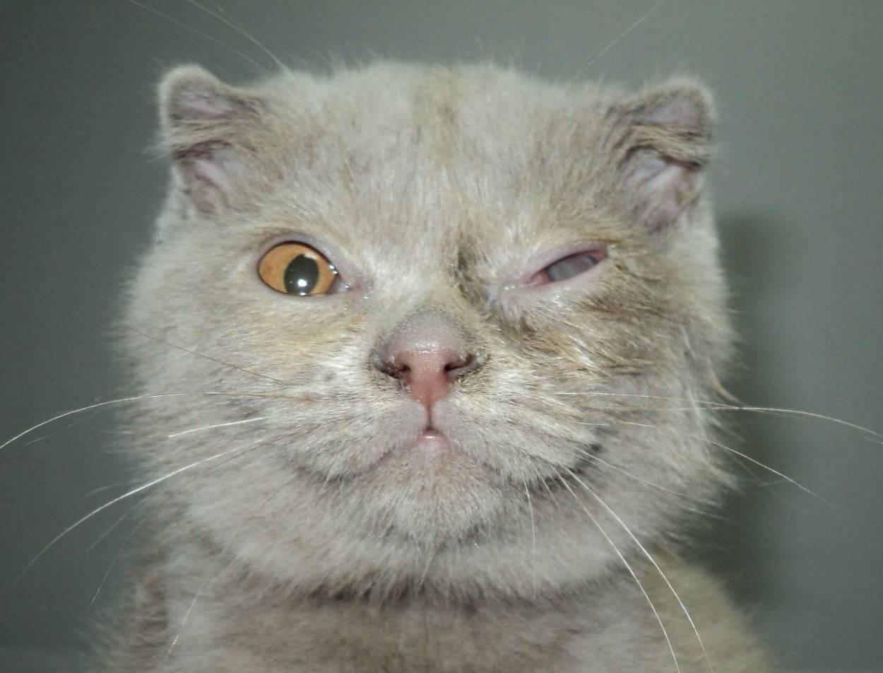 Лечение травмы глаза у кошки • специализированное отделение офта