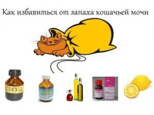Как избавиться от запаха кошачьей мочи:  как и чем вывести