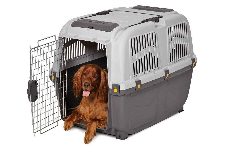 Как перевозить собаку в самолете: правила и рекомендации