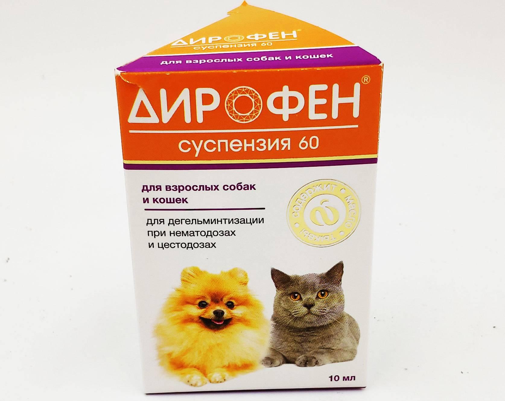 Дирофен для кошек: инструкция по применению, особенности действия и отзывы