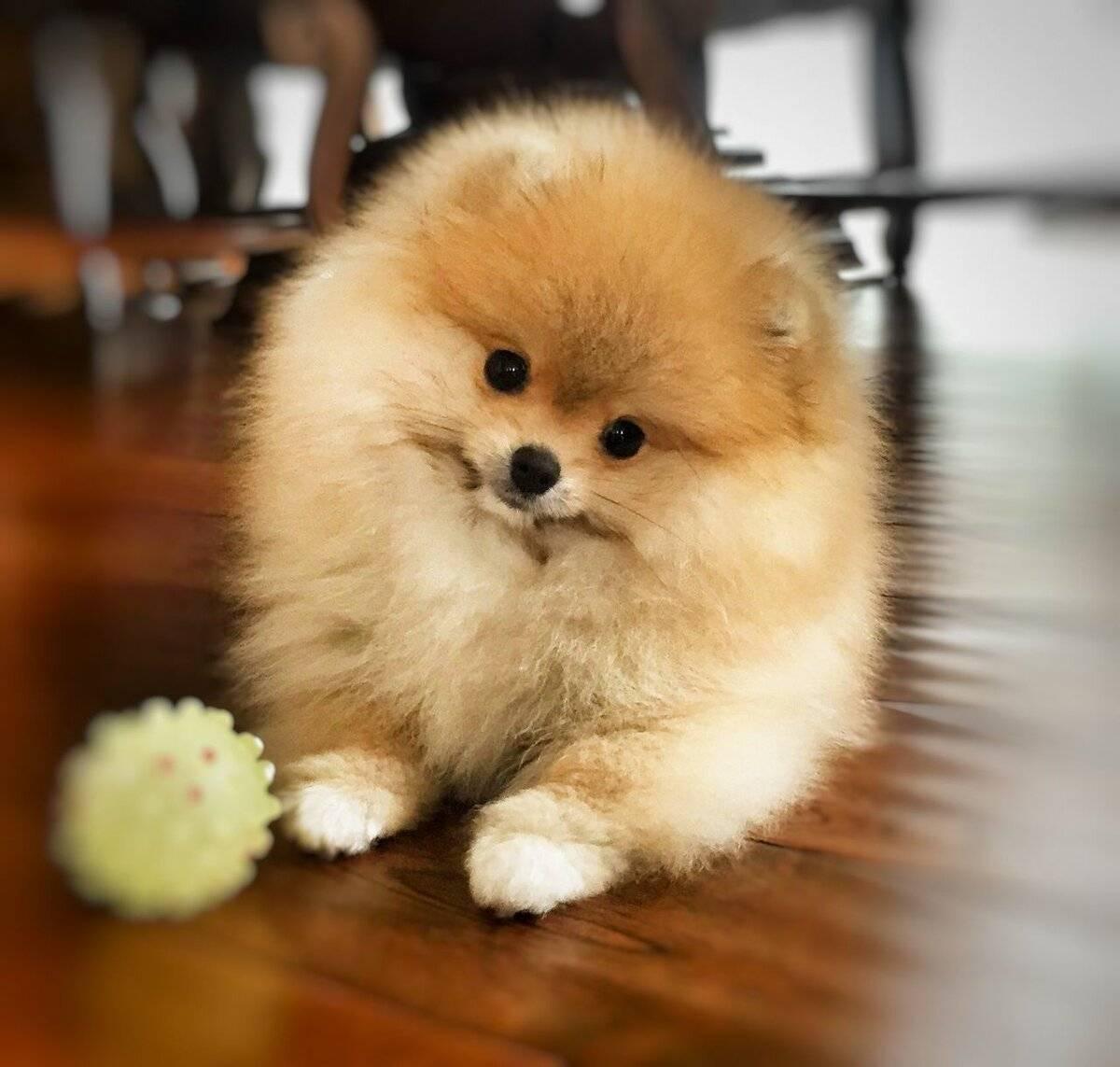 10 самых красивых пород собак