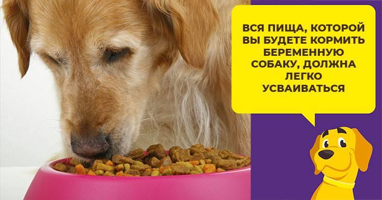 Почему собака не может сходить в туалет по-большому? запор у собаки: частые причины и лечение - новая медицина