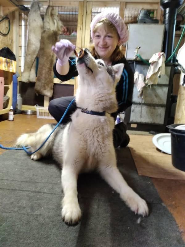 Меняется ли характер у стерилизованных кошек?