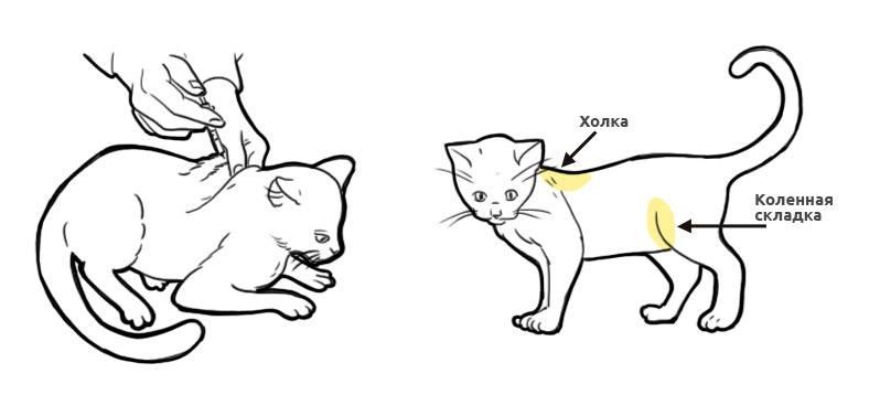 Как сделать укол кошке - в холку, внутримышечно, в бедро, подкожно в домашних условиях