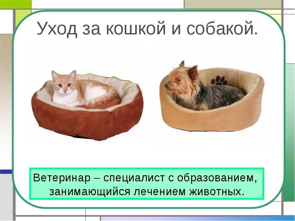 Как правильно ухаживать за котенком — основы гигиены и кормления