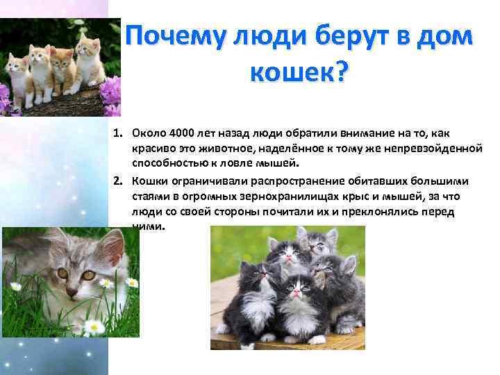 Выбор котёнка у заводчика: всё, что нужно знать