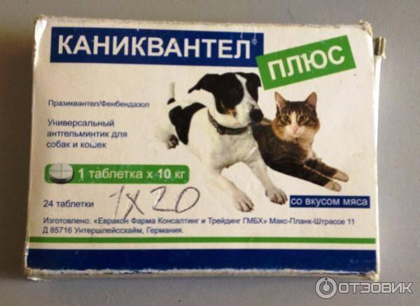 Каниквантел для кошек от глистов — когда нужно давать?