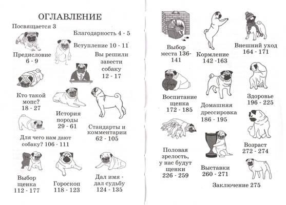Порода собак мопс: характеристика породы, уход и кормление, щенки, стандарты