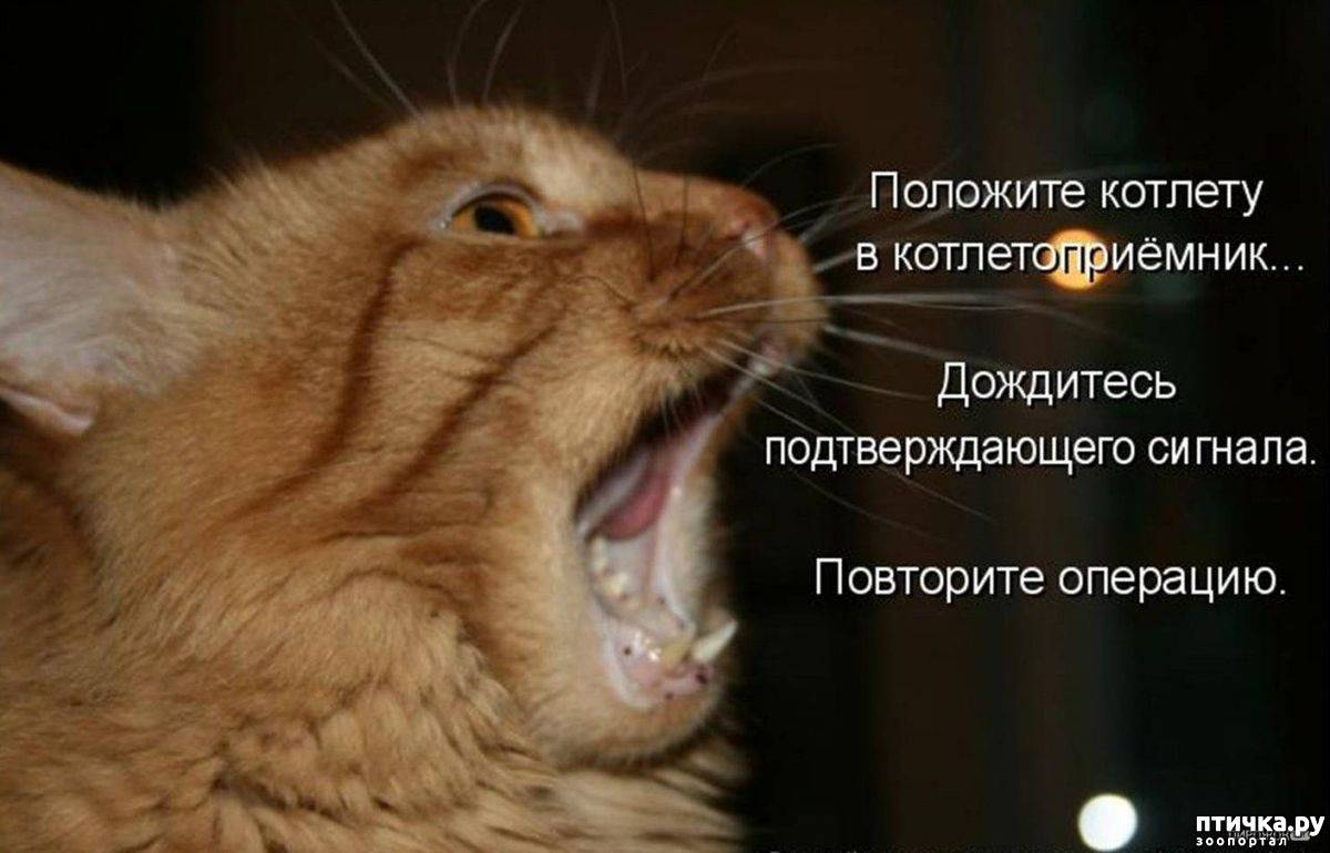 Как отучить кота орать