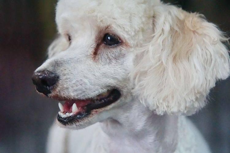Можно ли справиться с пигментацией у собак?
