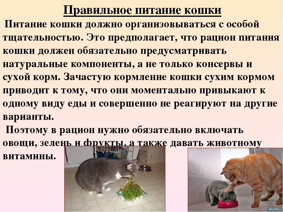 Сколько кошка и кот могут прожить без еды и воды: причины отказа питомцев принимать пищу и влияние голодовки на здоровье животного