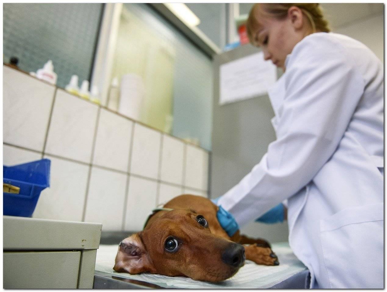 Покусала собака: можно ли получить компенсацию?