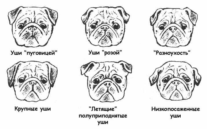 Продолжительность жизни собаки: от чего зависит, сколько лет живут собаки в домашних условиях, а сколько – на улице, рекомендации по продлению жизни питомцев