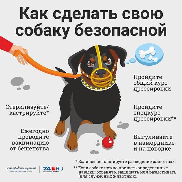 Как выбрать щенка? 10 правил | мир собак. журнал о собаках. доска объявлений. породы. дрессировка.