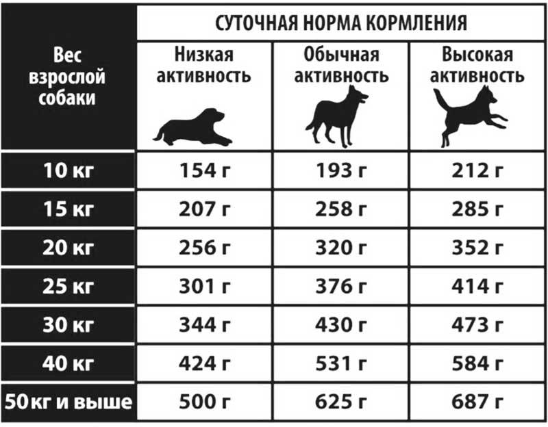 Как переводить собаку на двухразовое питание, когда делают перевод, какое время кормления оптимально при двухразовом питании собаки