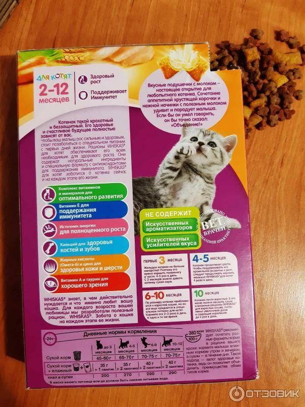 Полезен ли корм для кошек?