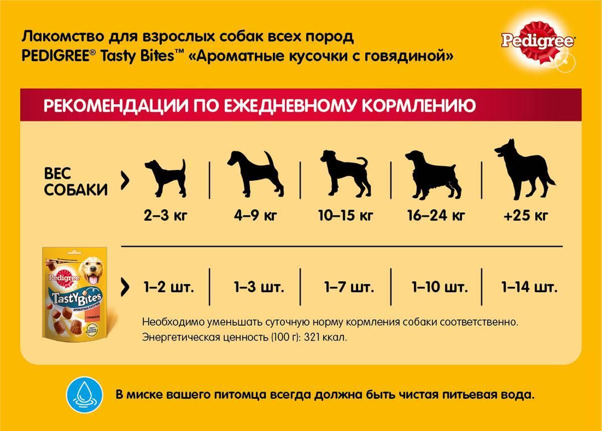 Корма супер премиум класса для собак: список, рейтинг, отзывы - петобзор