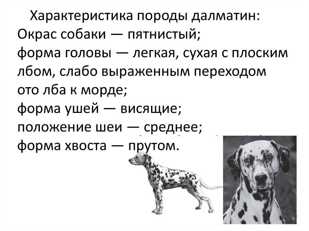 Характеристика внешности и поведения такс: особенности породы собак
