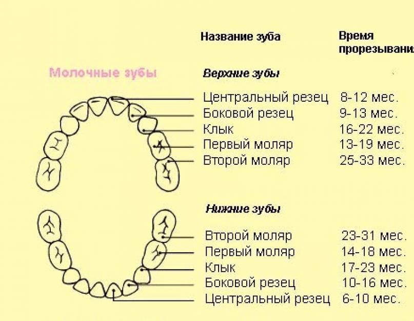 Девять жизней и два комплекта зубов