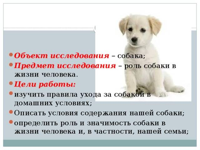 Уход за шерстью собаки: средства и инструменты для груминга собак | royal groom