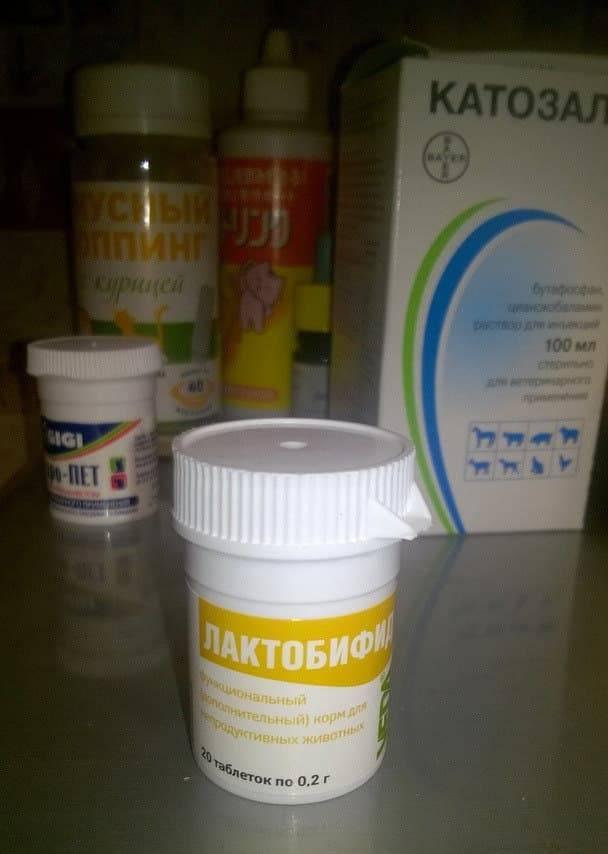 Лактобифид (таблетки) для собак и кошек | отзывы о применении препаратов для животных от ветеринаров и заводчиков