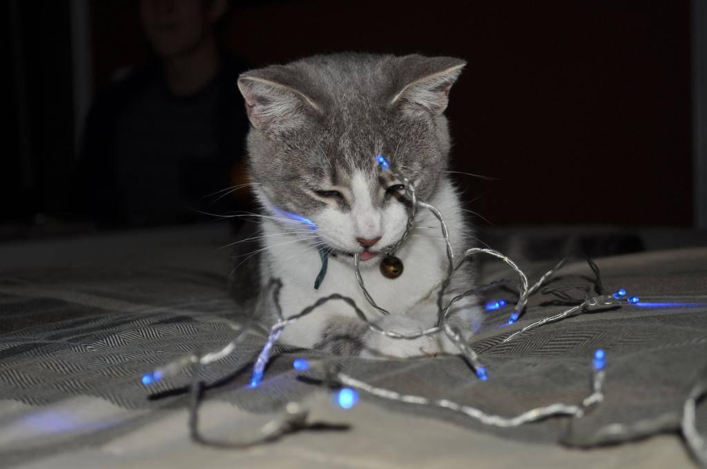 Кошка всё грызёт