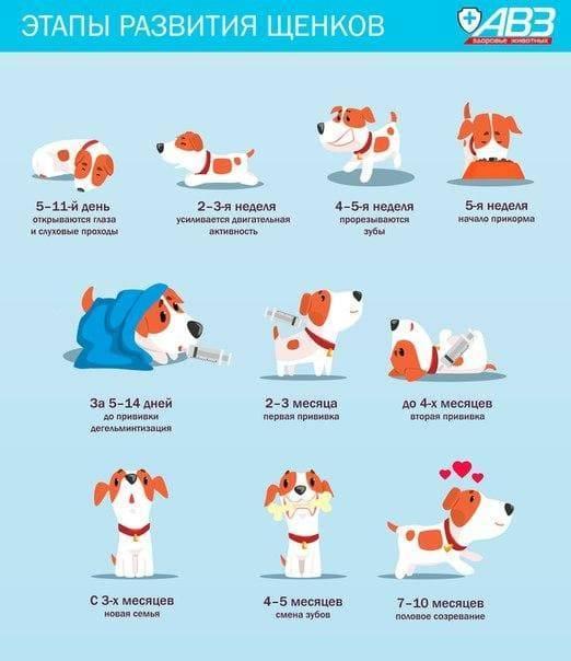 Когда лучше забирать щенка от матери? автор ветеринар