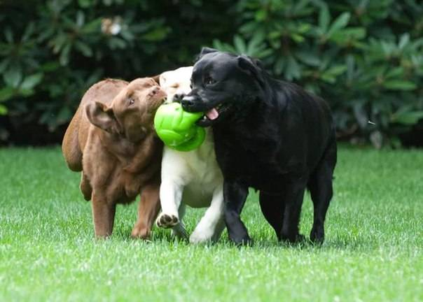 Самые неприхотливые собаки для занятых людей