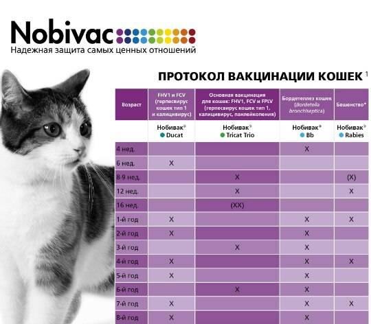Как глистогонить кошку: когда проводить, как часто, лучшие препараты и народные средства