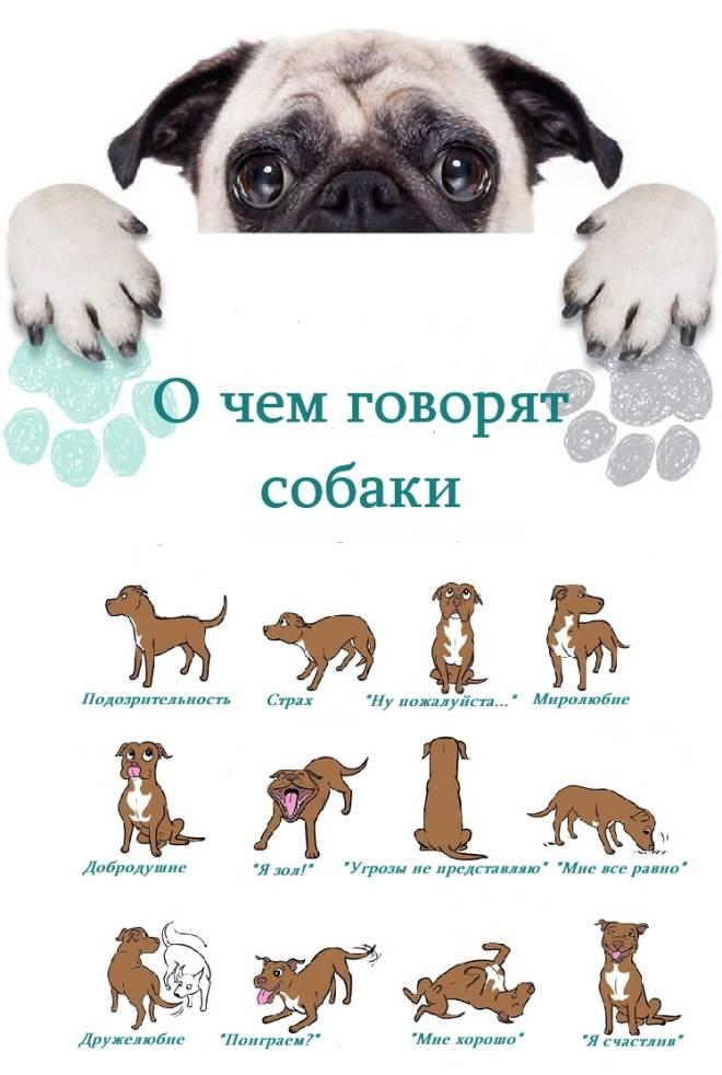 Нужно ли моей собаке общение с другими собаками?