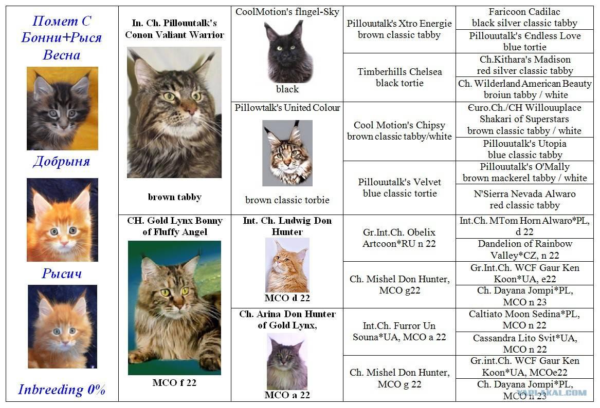 Клички для кошек (500+ имен)