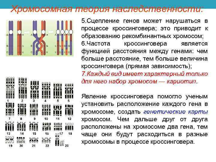 Доктор маланова ::  исследование полового хроматина