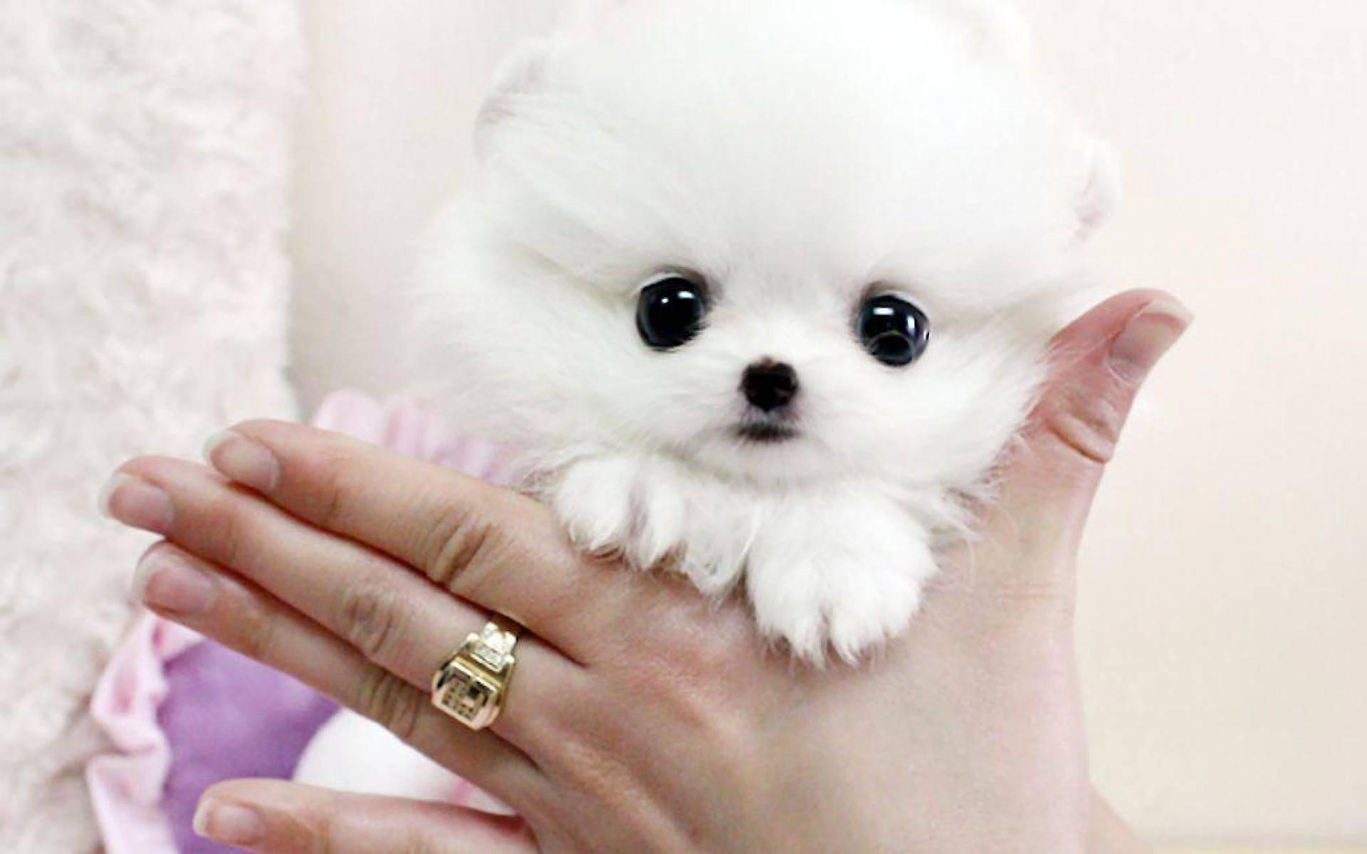 Милые собачки (40 фото): породы самых маленьких собак в мире с названиями. как выбрать пушистых щенков и красивых больших животных?
