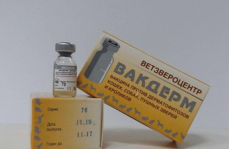 Инструкция по применению вакцины вакдерм f