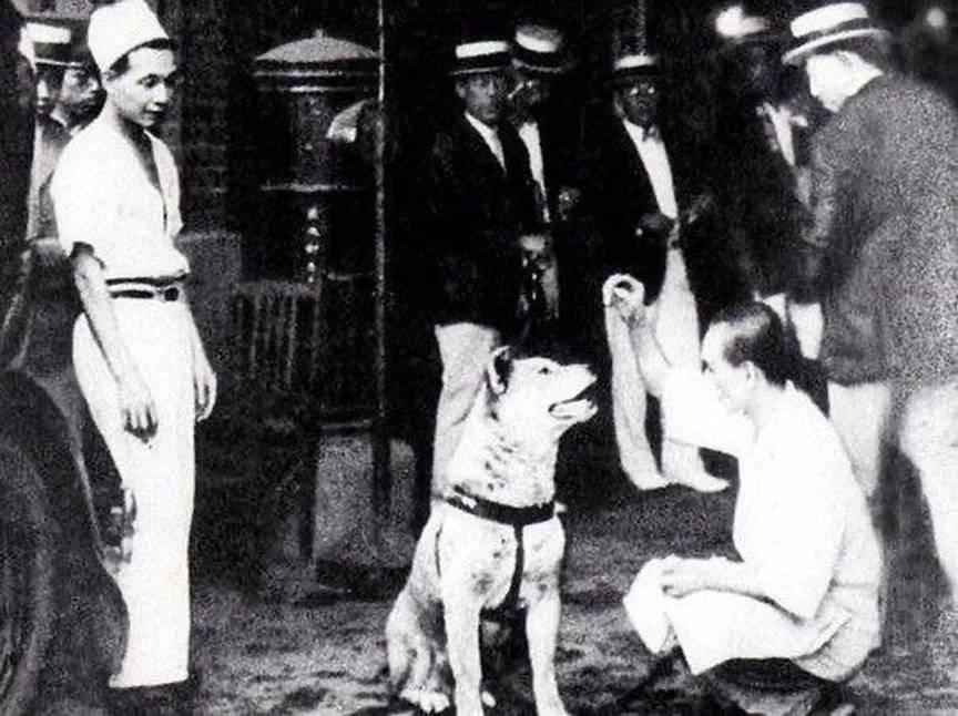 """Порода собаки из фильма """"хатико"""": фото и название, описание характера - animallist.ru"""