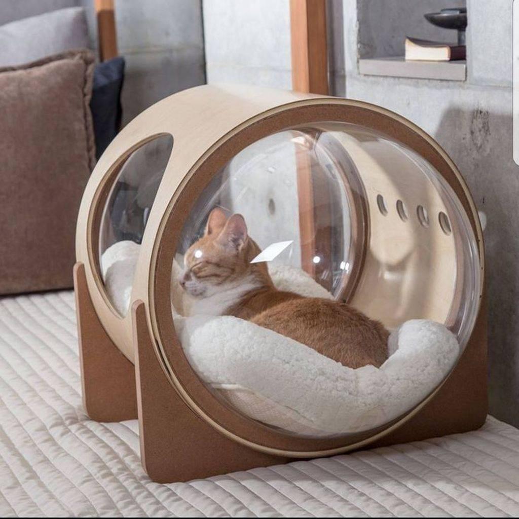 Как самому делать развивающие игрушки для собаки из подручных материалов