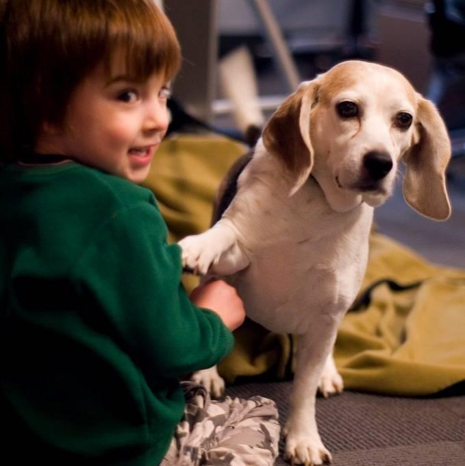 Лучшие собаки для детей — топ 20 пород