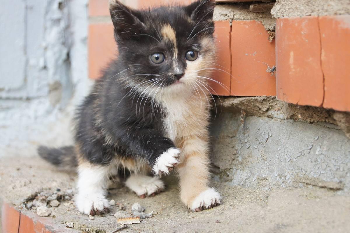 Трехцветная кошка: приметы и особенности трехцветная кошка: приметы и особенности