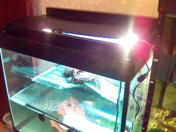 Принцип работы уф лампы для рептилий. почему ультрафиолет для рептилий может излучаться только в люминесцентных лампах?