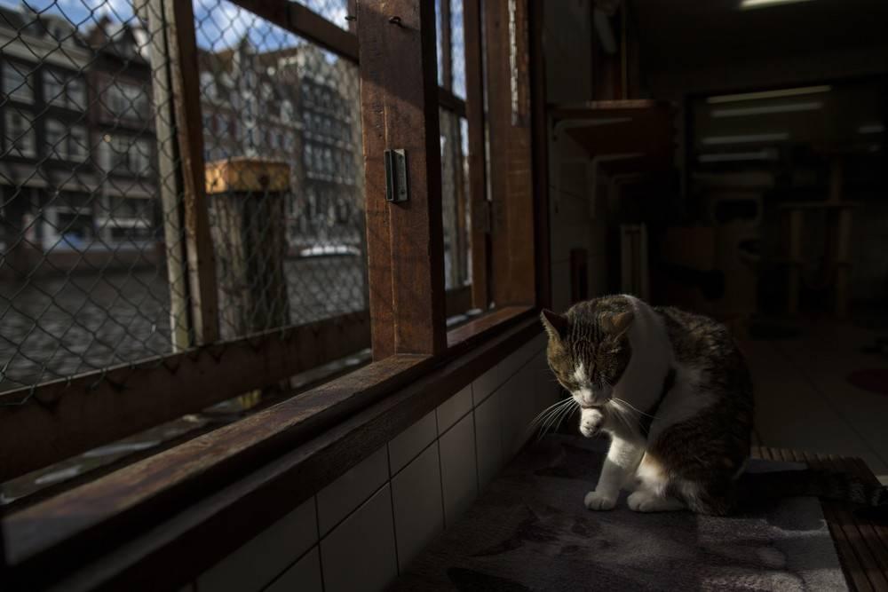 Лучше любого навигатора: как кошки находят дорогу домой — 4 лапки