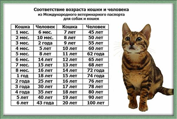 Как оставить кошку одну дома? - мир кошек