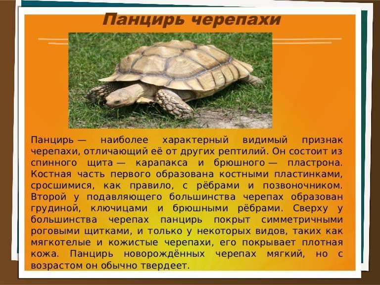 Сердечно-сосудистая и кровеносная система черепах - все о черепахах и для черепах