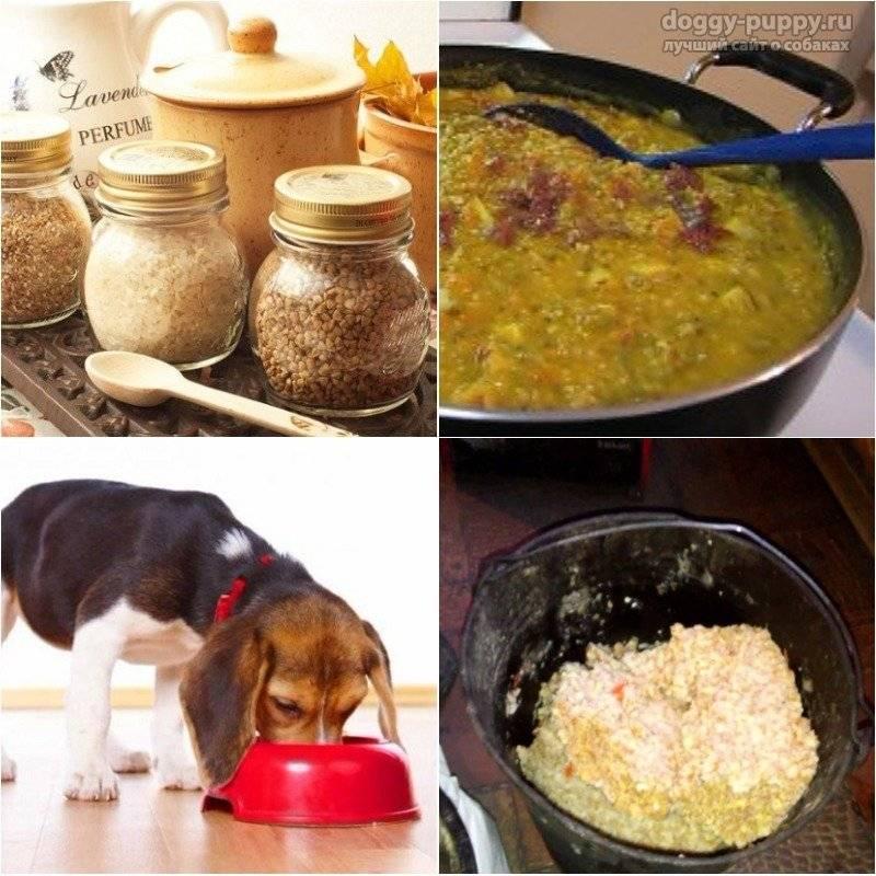 Каким мясом кормить щенка и собаку - какое мясо можно и нельзя собакам, можно ли давать сырое мясо