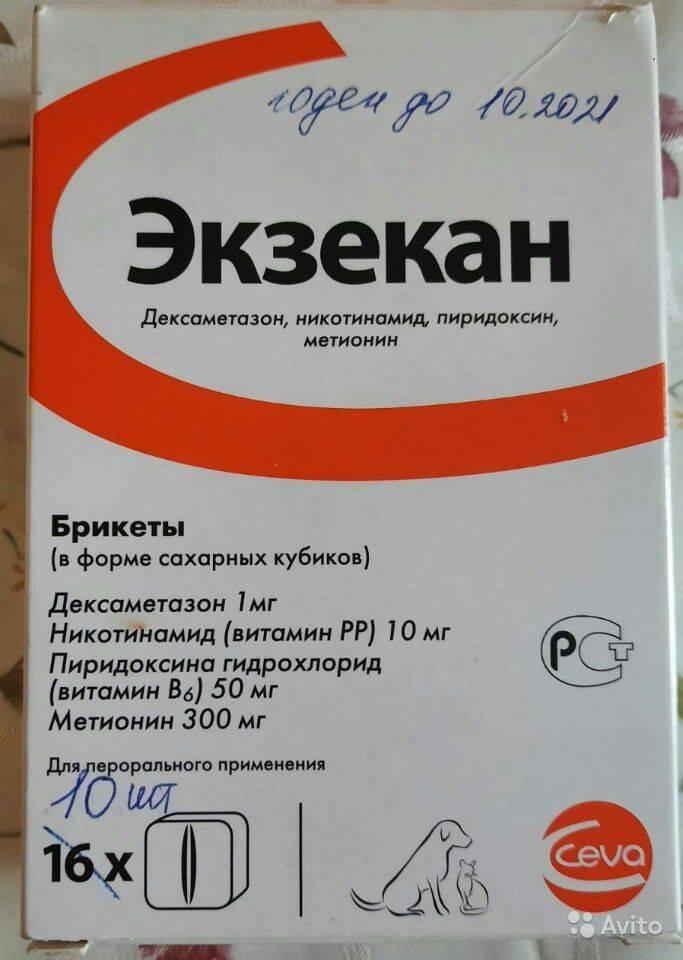 Экзекан для кошек поможет при лечении кожи