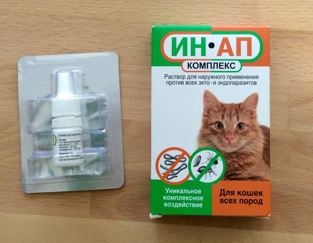 Капли от блох для кошек и котов: какие лучше | отзывы